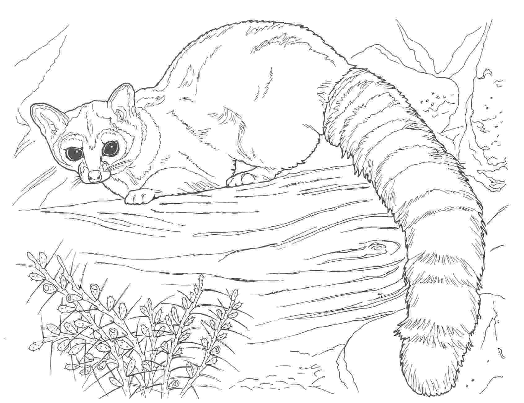 coloring pages animals realistic free tiger coloring pages realistic coloring pages animals