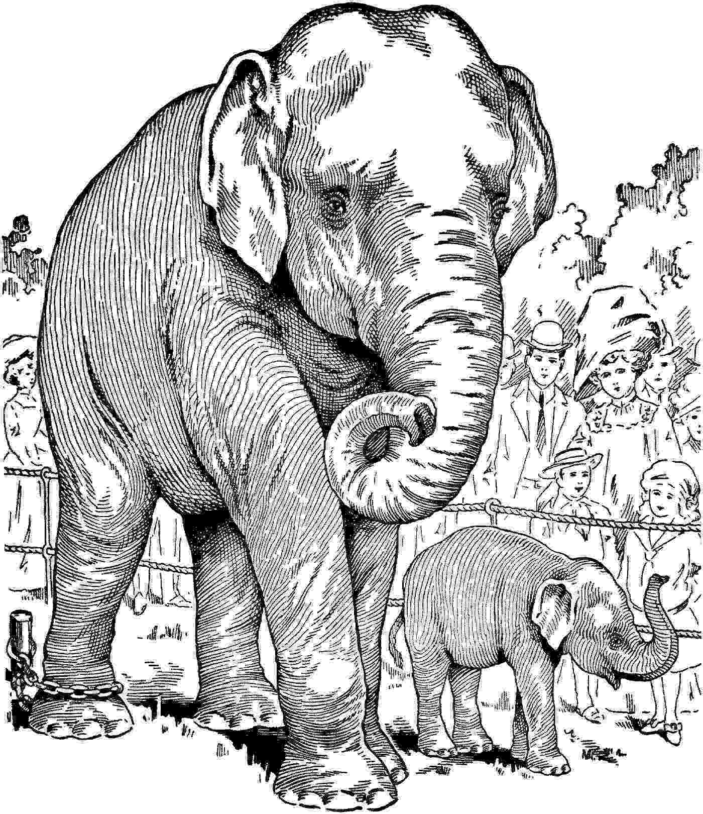 coloring pages animals realistic his heart of compassion autumn leaves coloring pages animals realistic