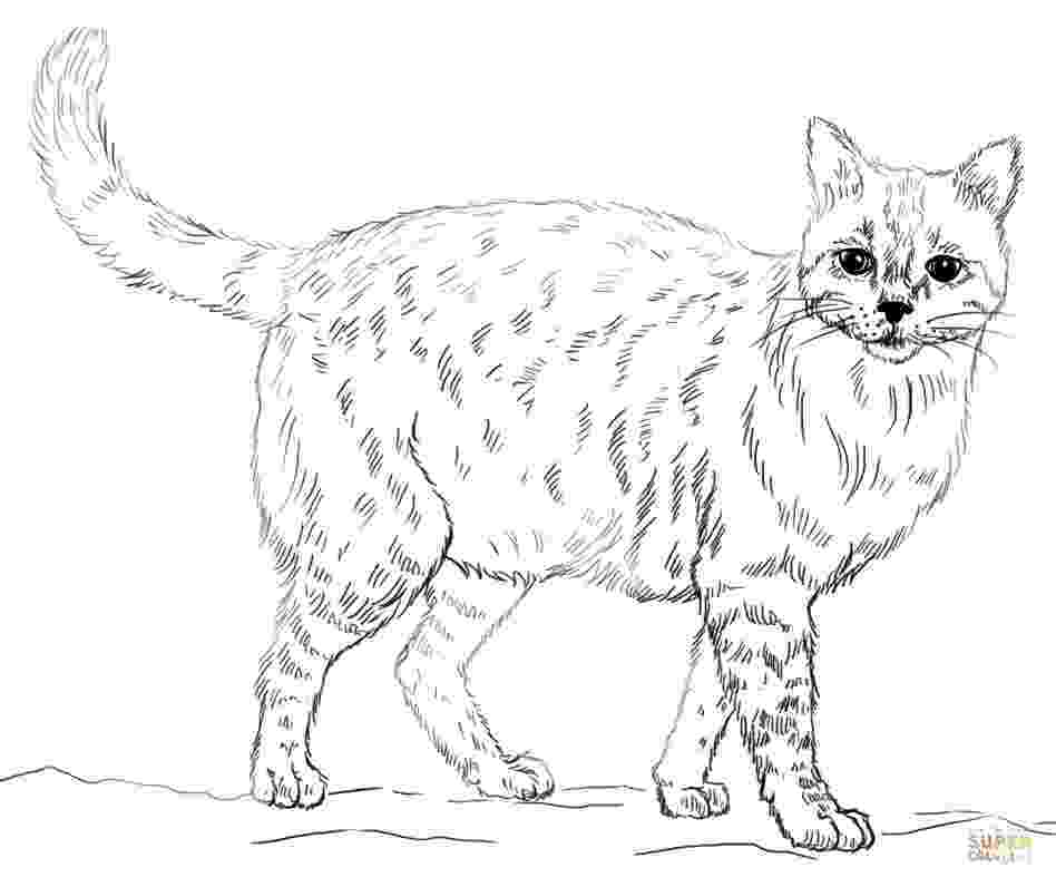 coloring pages animals realistic printable realistic animal coloring pages at getcolorings realistic pages animals coloring