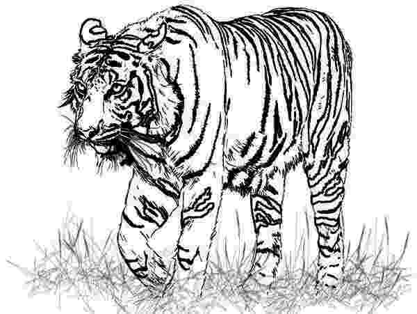 coloring pages animals realistic realistic animals coloring pages only coloring pages animals realistic coloring pages