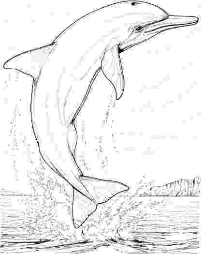 coloring pages animals realistic realistic dolphin coloring pages for adults enjoy pages realistic animals coloring