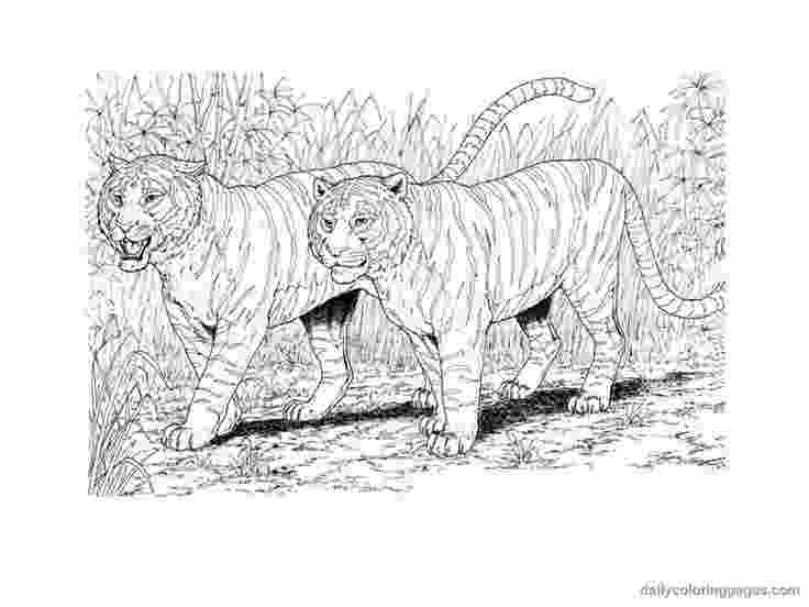 coloring pages animals realistic realisticanimalcoloringpages1lrgjpg thebooks animals pages realistic coloring