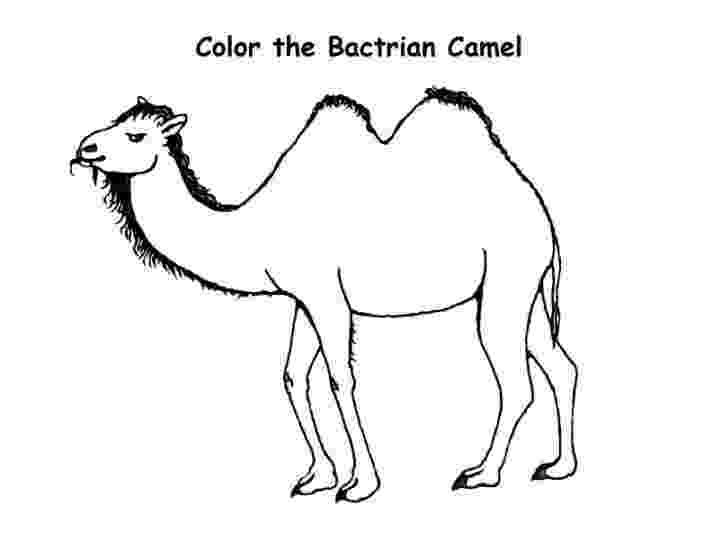 coloring pages camel 19 best rapunzel disegni da colorare images on pinterest camel coloring pages