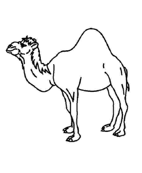 coloring pages camel camel printable bible coloring pages kids bible maps coloring camel pages
