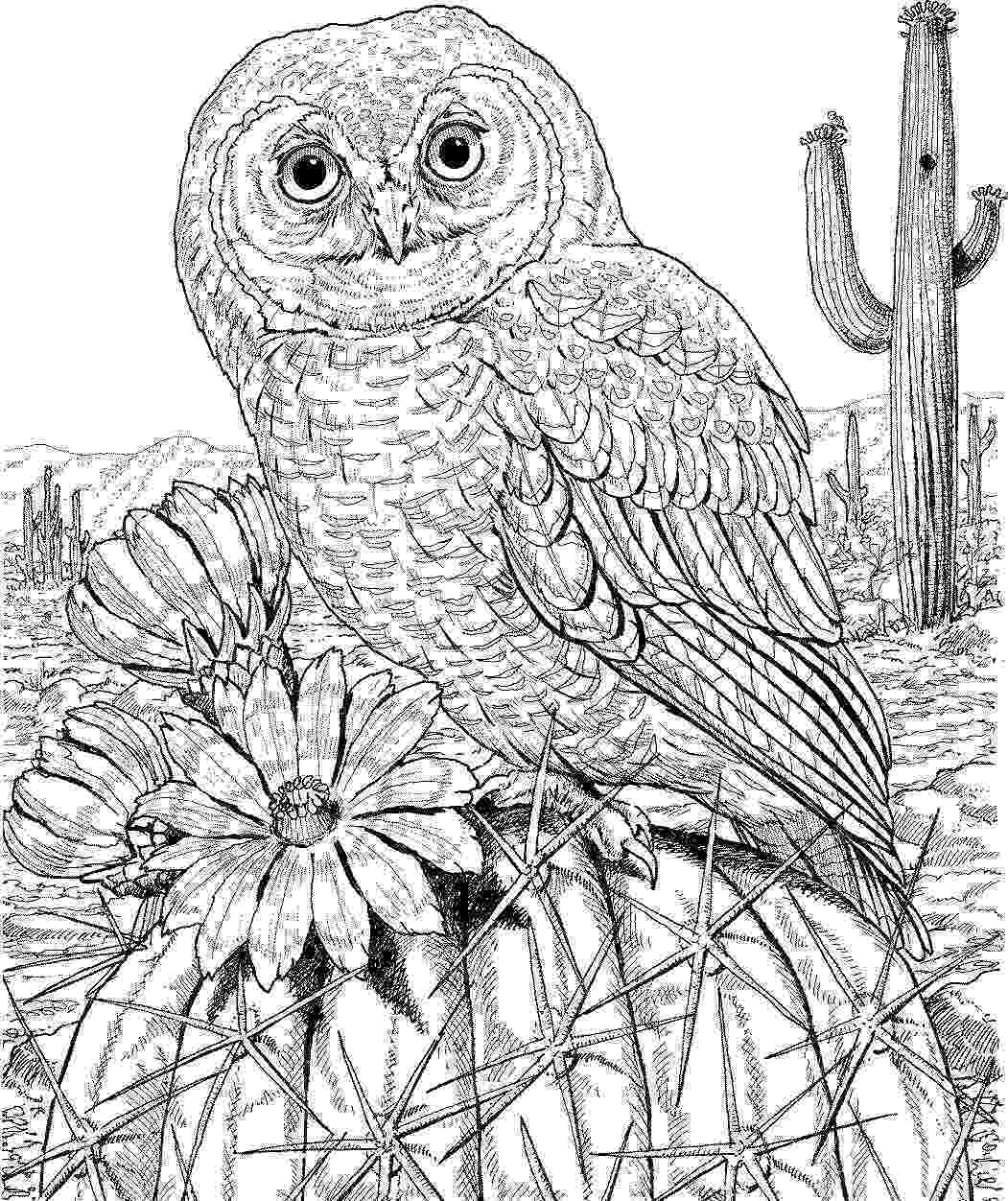 coloring pages for adults with owls 10 difficult owl coloring page for adults owls adults for with coloring pages