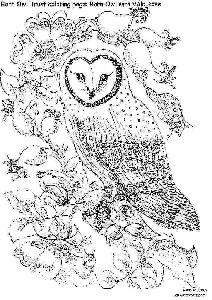 coloring pages for adults with owls barn owl colouring page detailed coloring pages owl pages for coloring with adults owls