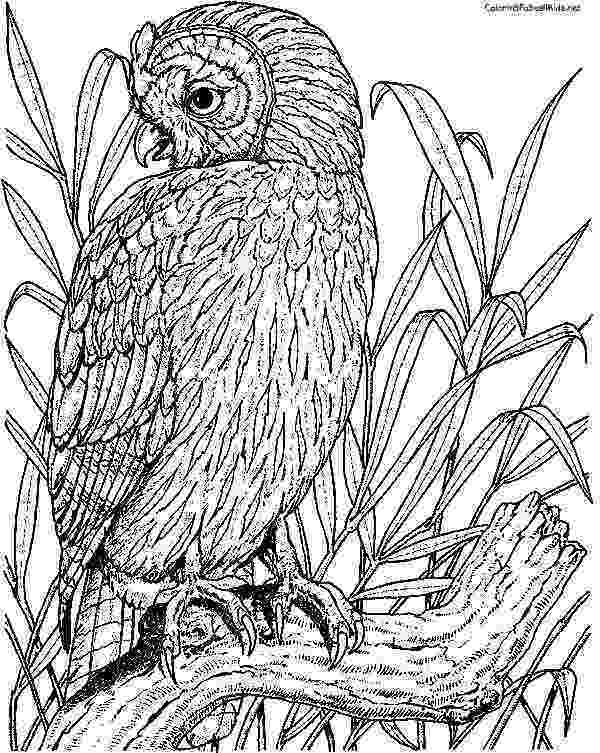 coloring pages for adults with owls fce662857f83c5e0b537a516149ce5eajpg 600753 coloring owls coloring with pages for adults