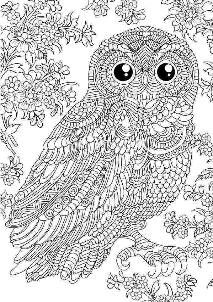 coloring pages for adults with owls owl coloring pages for adults free detailed owl coloring for with pages adults coloring owls