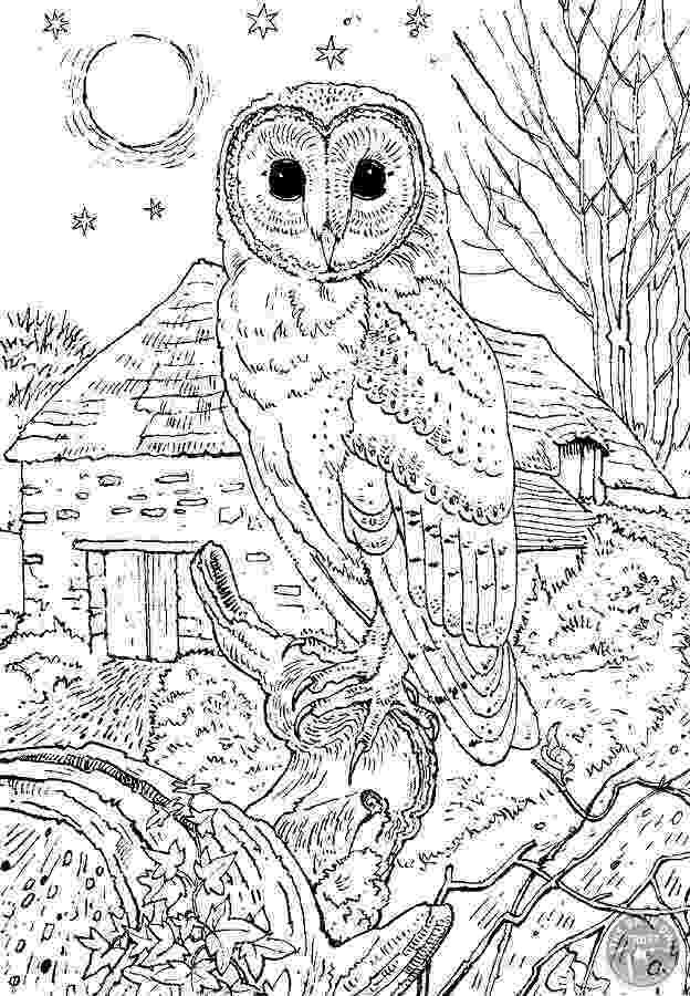 coloring pages for adults with owls peaceful owl owls adult coloring pages for adults coloring owls with pages