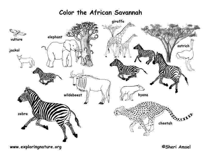 coloring pages grassland animals african animals coloring page coloringbay pages grassland animals coloring