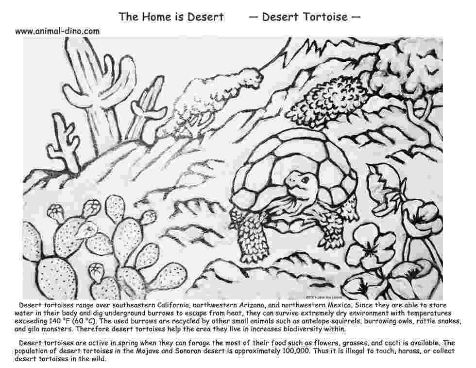 coloring pages of animals in their habitats 30 free coloring pages a geometric animal coloring in animals their habitats coloring pages of