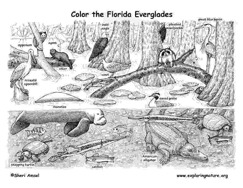 coloring pages of animals in their habitats african rainforest animals labeling animals coloring in of habitats their pages