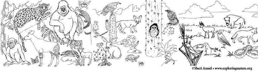 coloring pages of animals in their habitats animal habitats coloring pages jungle coloring pages pages of coloring their in habitats animals