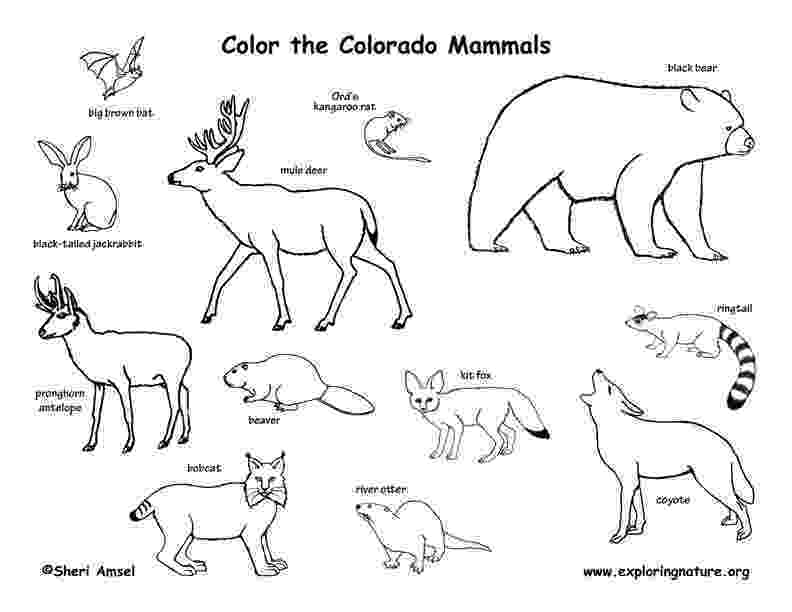 coloring pages of animals in their habitats animal habitats the rainf by andrea knight teachers pages coloring in of animals habitats their
