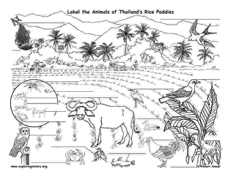 coloring pages of animals in their habitats animal habitats wetlands a flap book project for grades 1 3 of their habitats in pages animals coloring