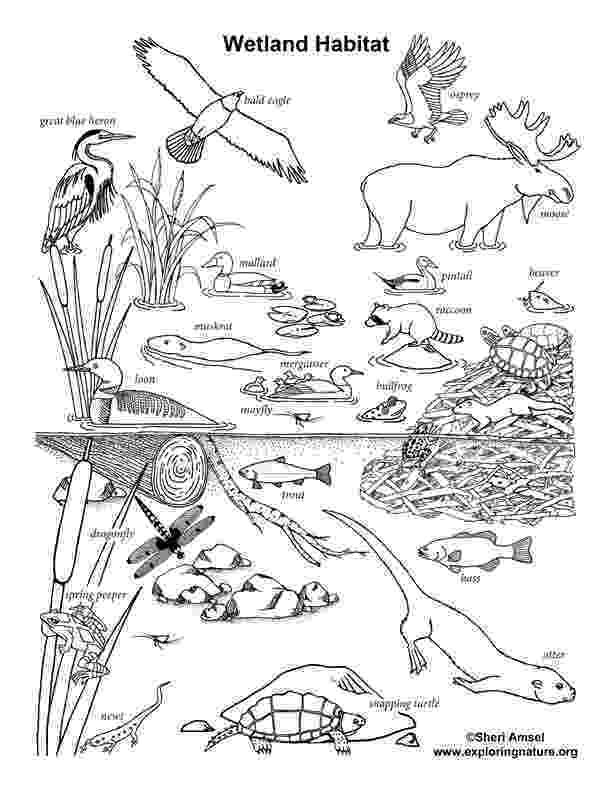 coloring pages of animals in their habitats arctic habitat coloring page of in coloring habitats animals their pages