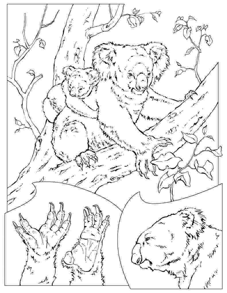 coloring pages of animals in their habitats california habitats mammals birds amphibians reptiles pages animals habitats their of coloring in