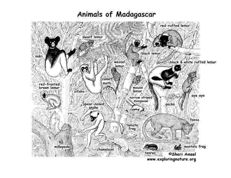 coloring pages of animals in their habitats coloring pages wildlife research conservation their of coloring habitats pages in animals