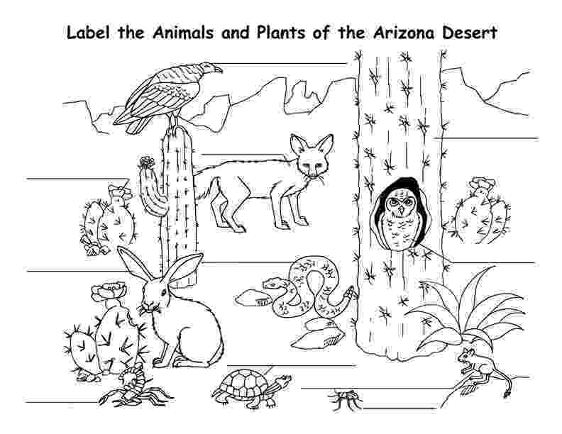 coloring pages of animals in their habitats desert coloring pages best coloring pages for kids of pages habitats coloring in their animals