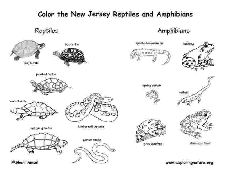 coloring pages of animals in their habitats florida animals coloring pages download and print for free in habitats animals pages coloring of their