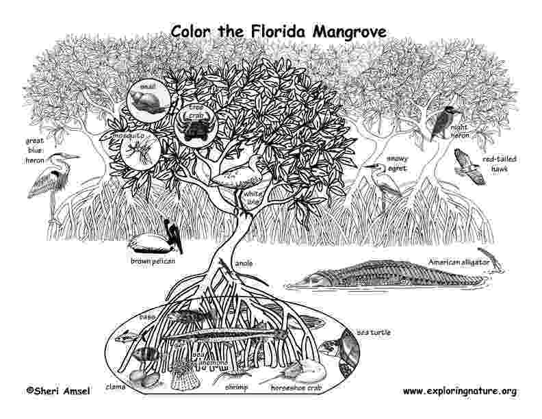 coloring pages of animals in their habitats madagascar rainforest animals and plants coloring habitats in of pages animals their