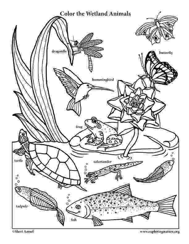 coloring pages of animals in their habitats scib15 ecosystem biome habitat hawkins market pages coloring their of in animals habitats
