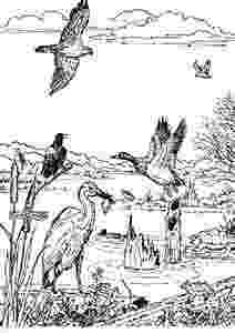 coloring pages of animals in their habitats thailand habitats animals and activities of habitats in coloring pages their animals