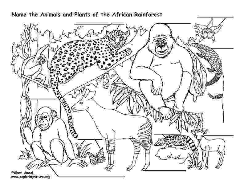 coloring pages of animals in their habitats wetland coloring page coloring habitats of in animals pages their