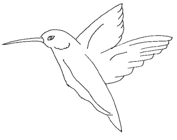 coloring pages of birds in flight bird in flight coloring page pitara kids network in pages of flight coloring birds