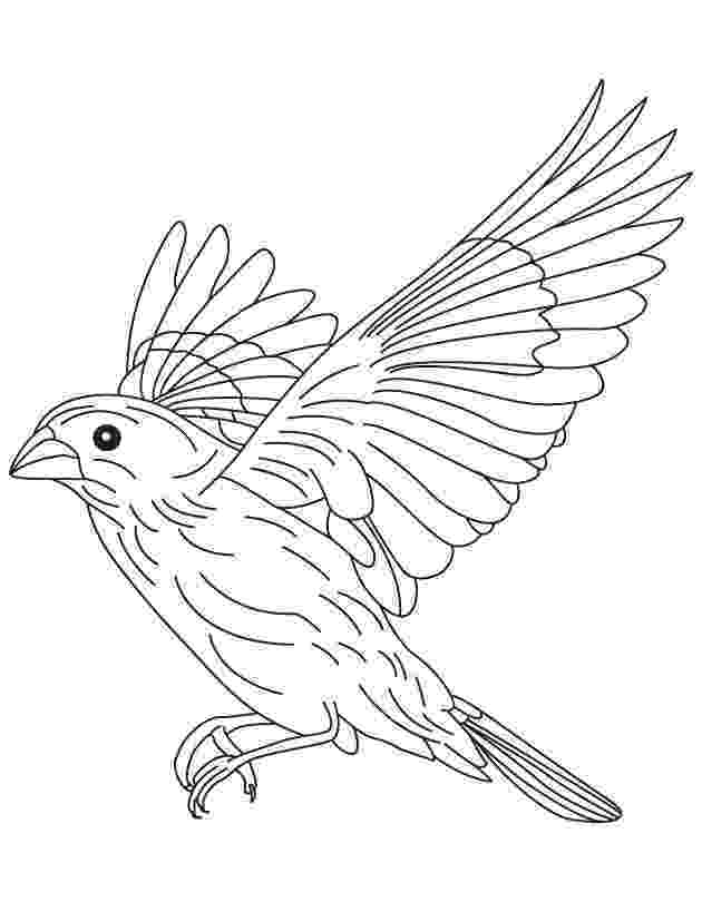 coloring pages of birds in flight flying bird coloring pages getcoloringpagescom in flight pages coloring birds of