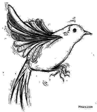 coloring pages of birds in flight flying bird coloring pages getcoloringpagescom pages coloring of in birds flight