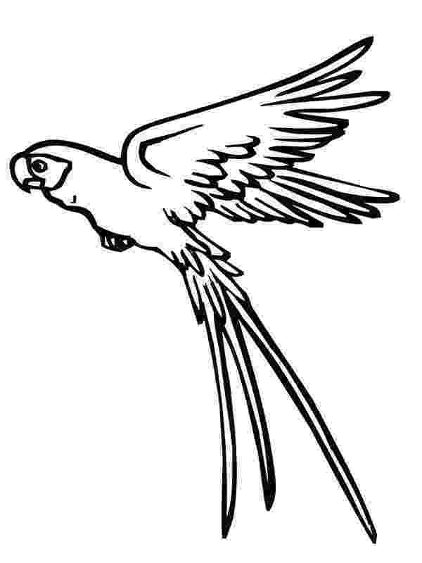 coloring pages of birds in flight free flying bird coloring pages gtgt disney coloring pages birds flight coloring of in pages