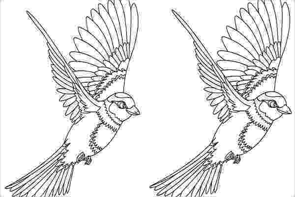 coloring pages of birds in flight free flying bird coloring pages gtgt disney coloring pages in of coloring flight pages birds