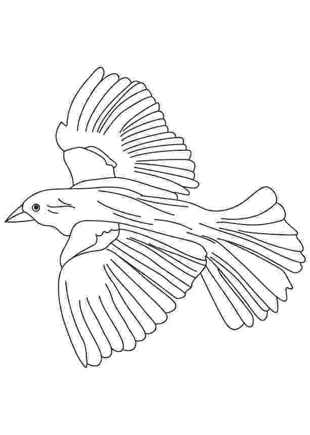 coloring pages of birds in flight parrot is flying coloring page download print online birds in of flight pages coloring