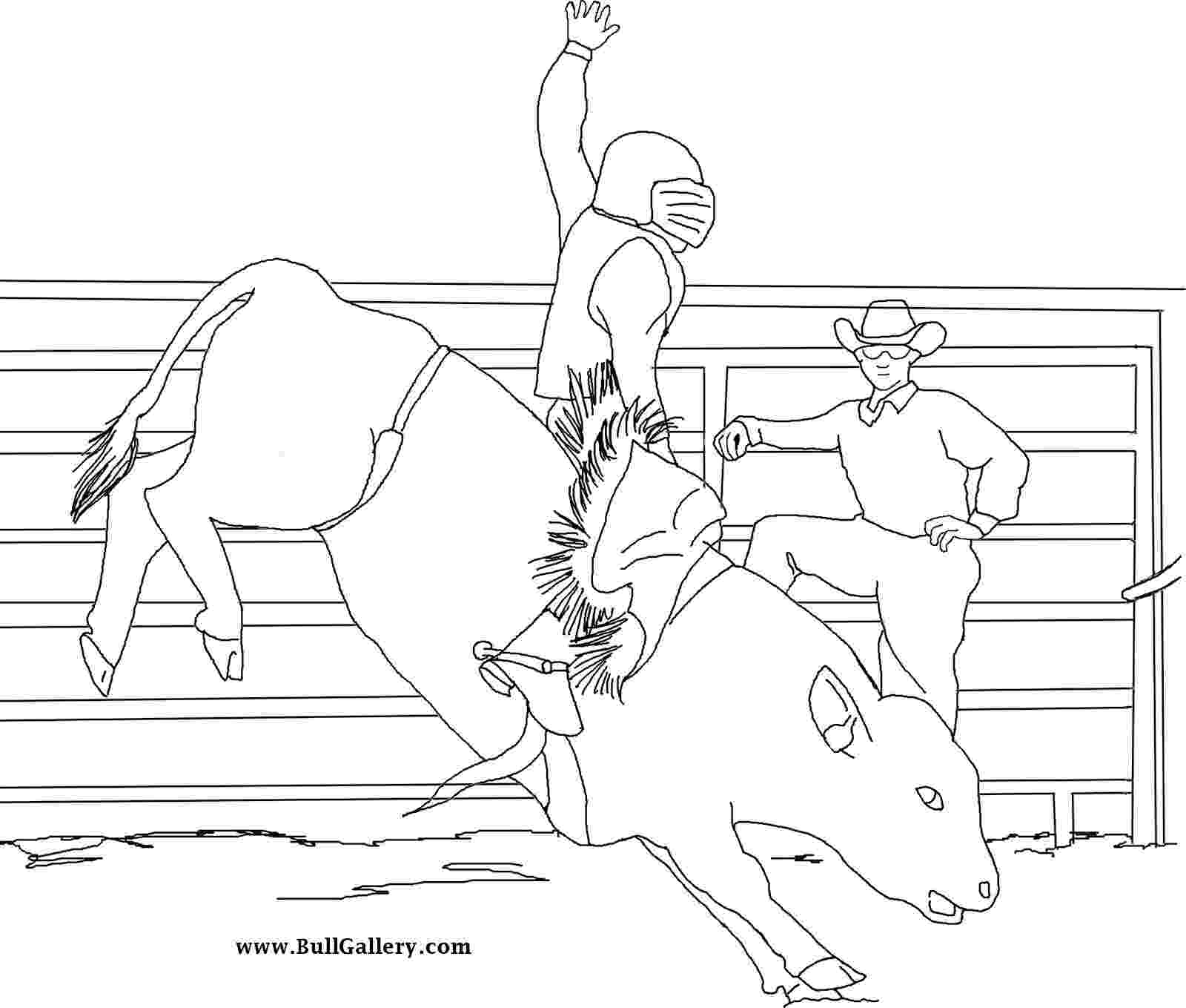 coloring pages of bull riding bull pictures to color free bull gallery bull pages coloring of riding