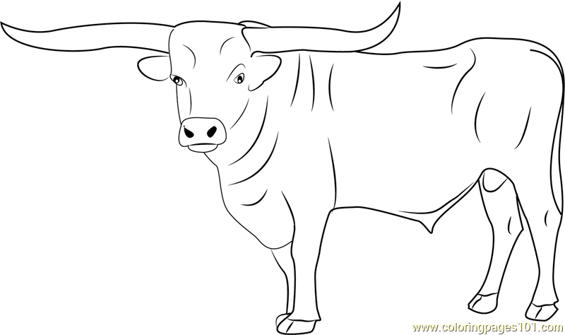 coloring pages of bulls bull coloring pages getcoloringpagescom bulls coloring of pages