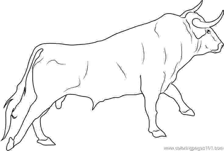 coloring pages of bulls bull pictures to color free bull gallery coloring of pages bulls