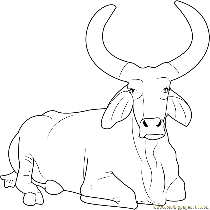 coloring pages of bulls spanish fighting bull coloring page free printable coloring bulls of pages