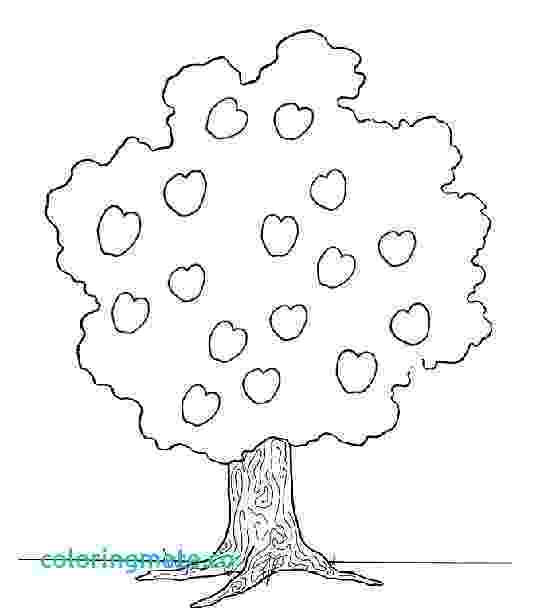 coloring pages of fruit trees fruit tree coloring page at getcoloringscom free coloring trees pages of fruit