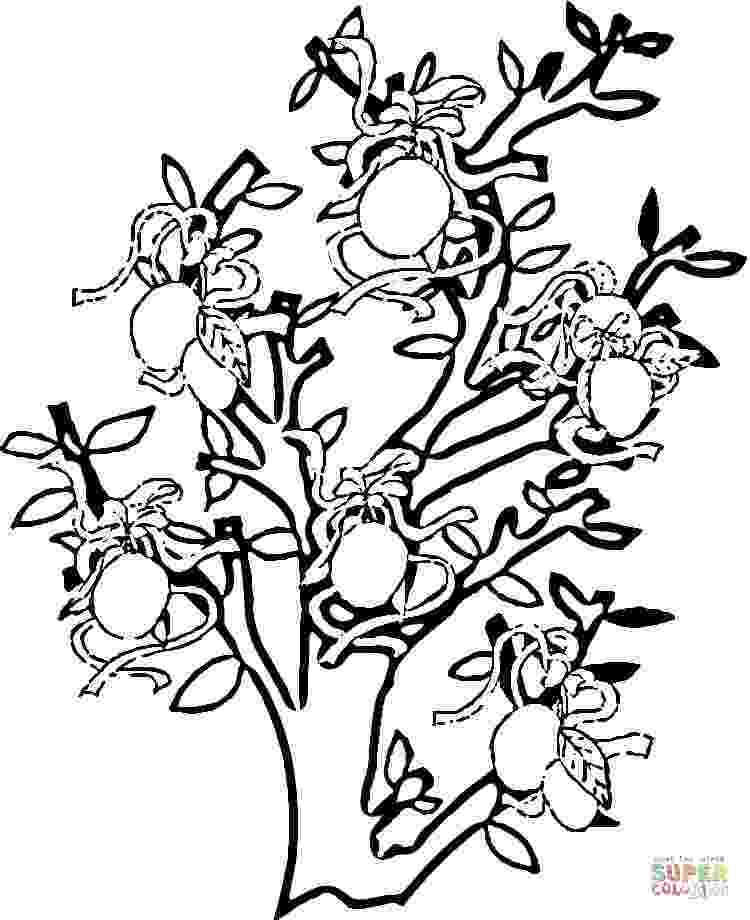 coloring pages of fruit trees fruit tree coloring page at getcoloringscom free trees of fruit coloring pages