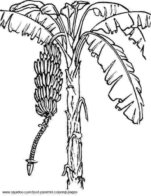 coloring pages of fruit trees orange tree fruit coloring page for kids fruits coloring pages coloring trees fruit of