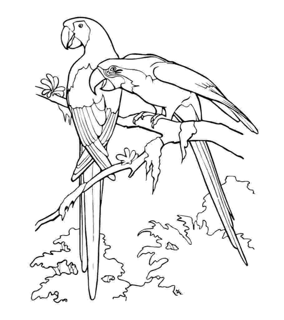 coloring pages of parrots parrot coloring pages getcoloringpagescom pages of parrots coloring