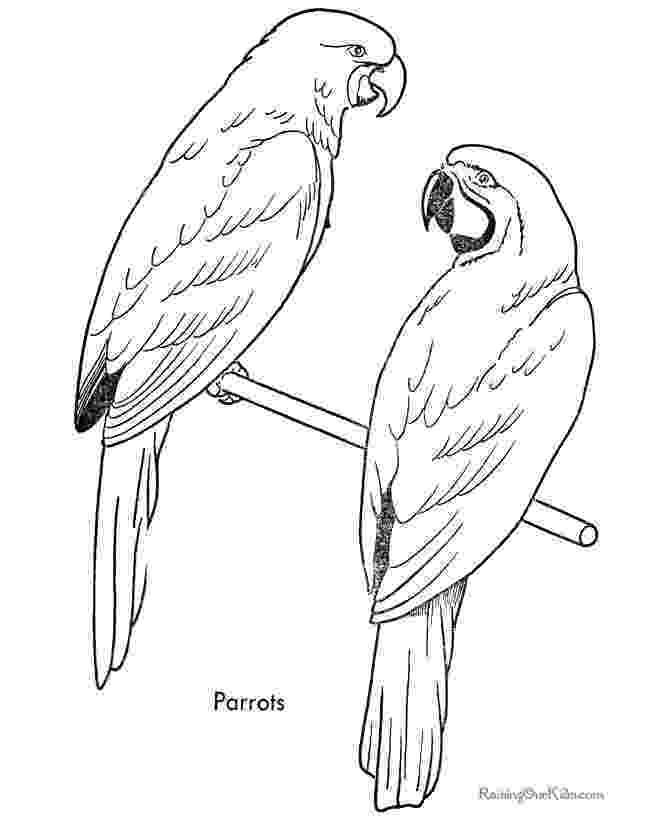 coloring pages of parrots two quaker parrots coloring page free printable coloring parrots coloring of pages