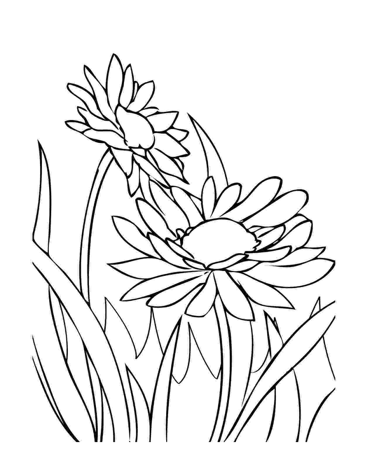 coloring pages of spring flowers spring coloring pages design magazine flowers coloring spring pages of