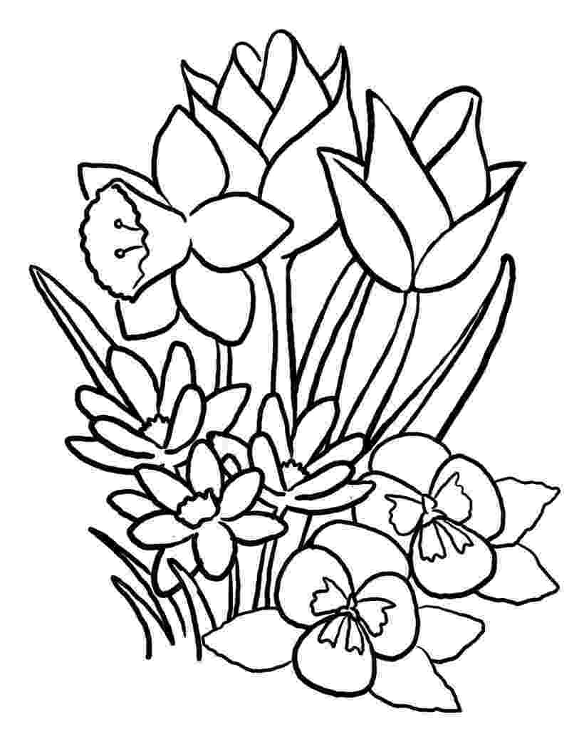 coloring pages of spring flowers spring flower coloring pages to download and print for free of flowers pages spring coloring