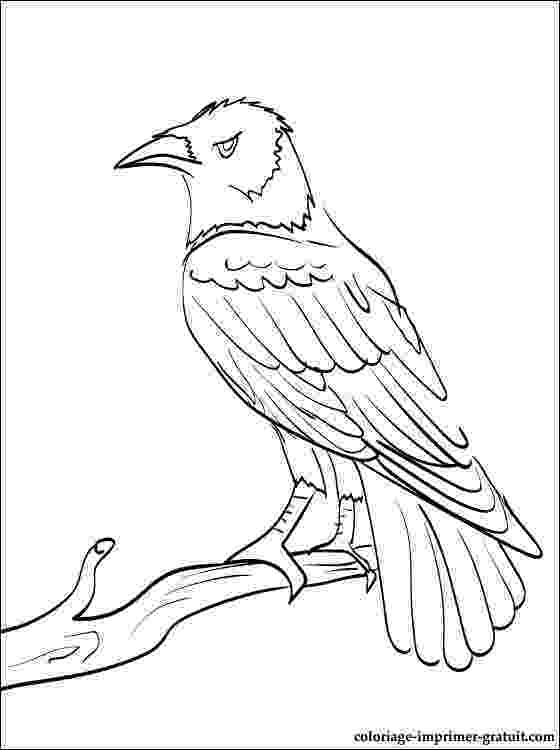 coloring pages raven common raven coloring page free printable coloring pages pages raven coloring