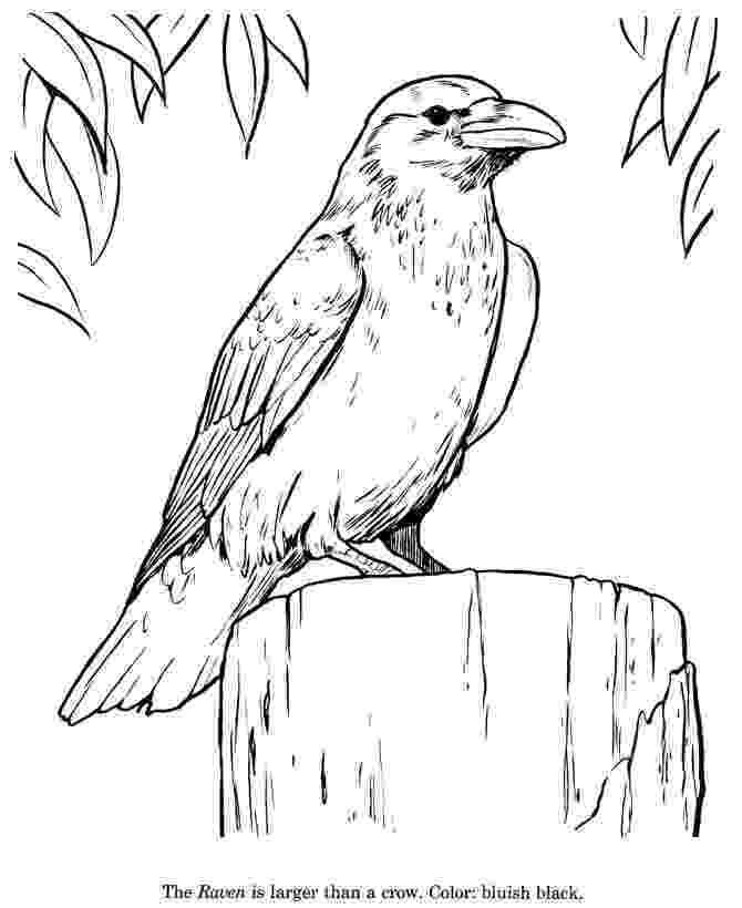 coloring pages raven ravan free colouring pages coloring pages raven