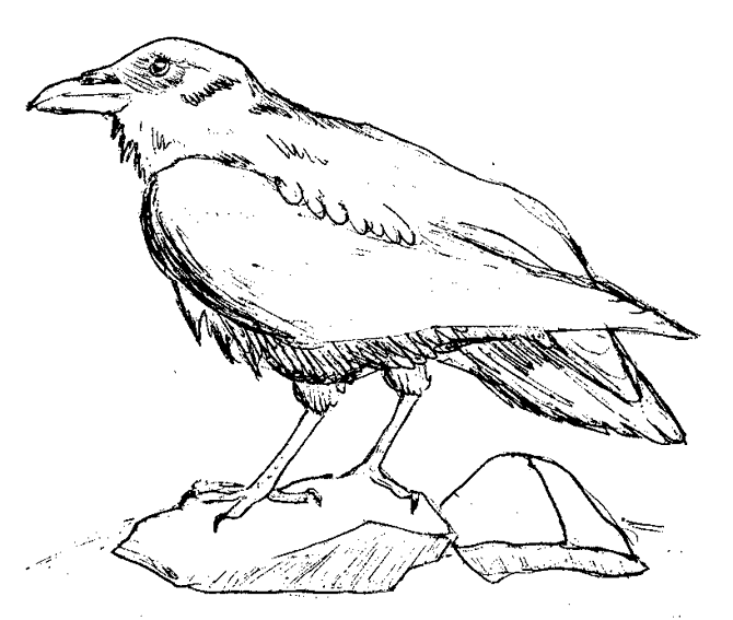 coloring pages raven teen titans raven coloring page coloring home raven pages coloring