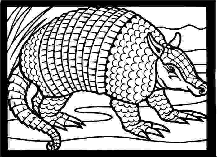 coloring patterns in the fact table 1000 images about armadillo cartoons on pinterest car in fact the table coloring patterns