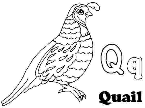 coloring picture quail quail coloring pages for preschool preschool and coloring quail picture